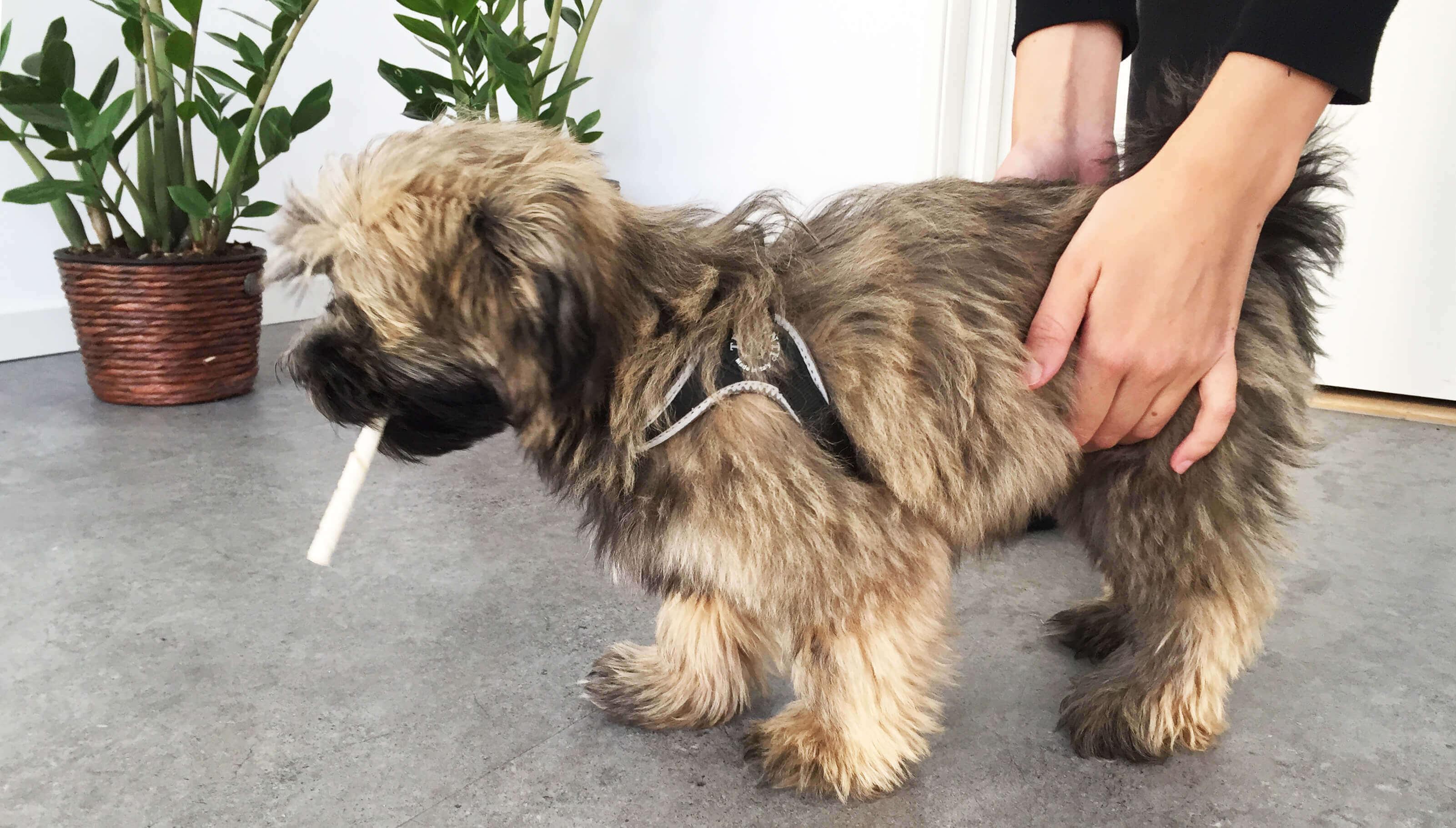 Heimlich-manövern hund | Eldupphör