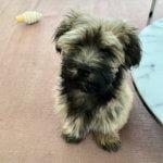Hemlichmanövern hund | Eldupphör